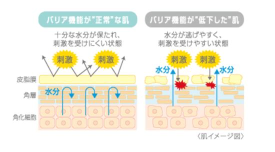 肌のバリア機能のイメージ図