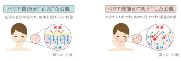 肌表面のイメージ図